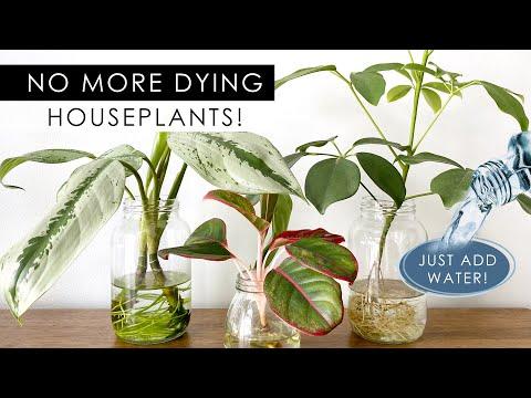 8 INDOOR PLANTS THAT CAN GROW IN WATER! *NO SOIL NEEDED!*