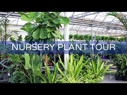 Relaxing Nursery Tour While You Self-Quarantine | Houseplant Positivity