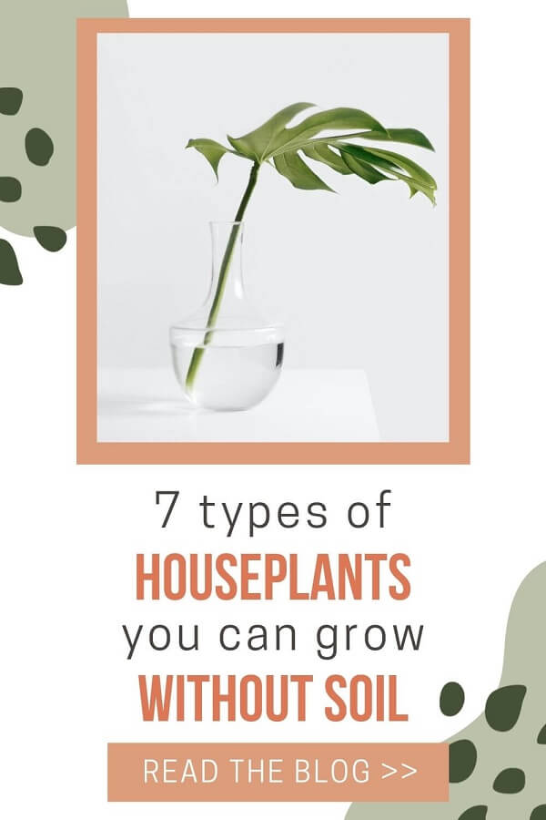 7 Houseplants You Can Grow Without Soil