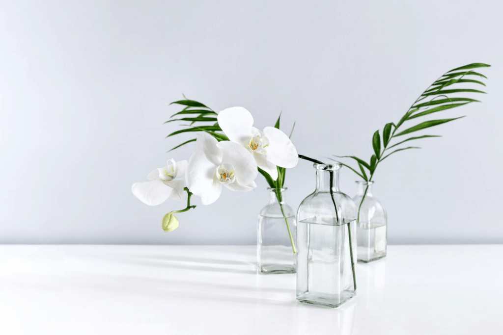 easy flowering plants cut white orchid