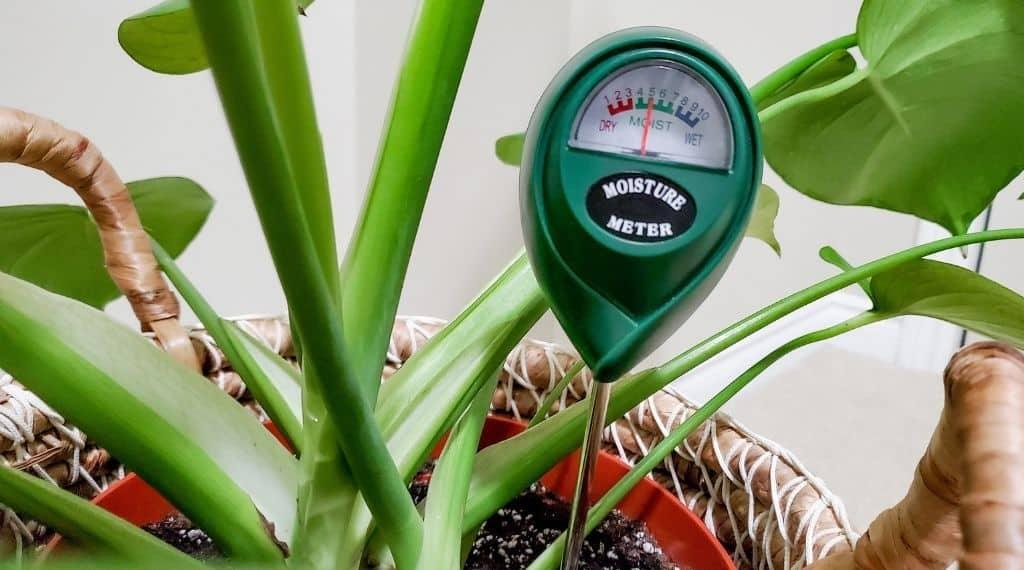 analog moisure meter in plant's soil