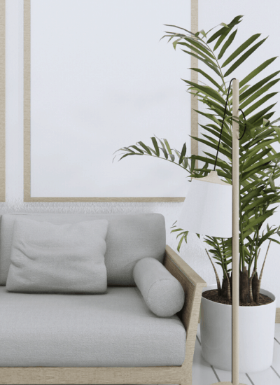 how to grow and care for palm plants
