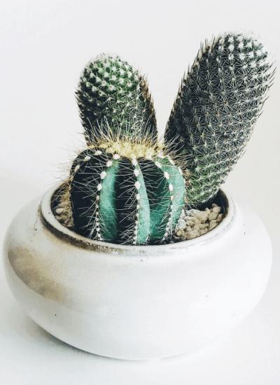 Cactus themed gift ideas