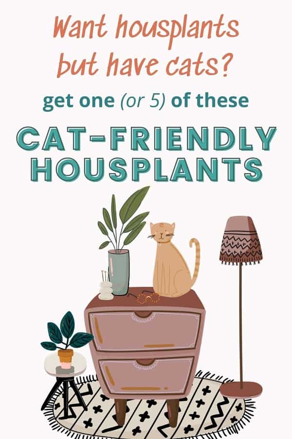 cat sitting on dresser with houseplants safe for cats