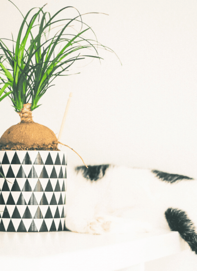 cat with cat safe houseplants