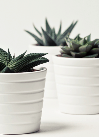 tips for growing succulents indoors