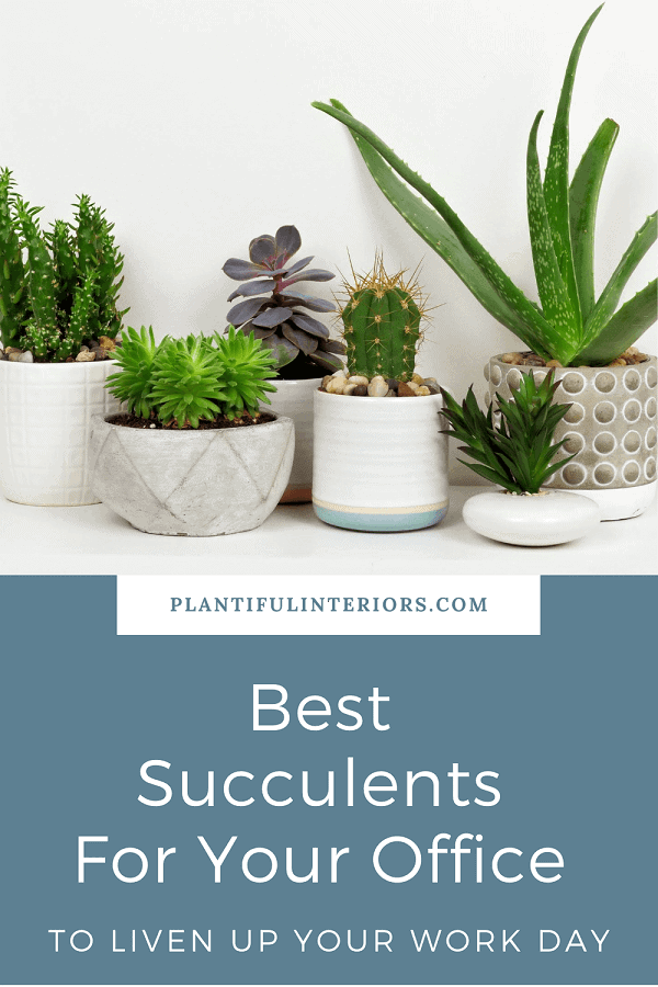 group of the best succulents for office