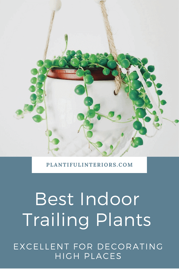 string of pearls plant in white ceramic hanging planter - list of best trailing indoor plants