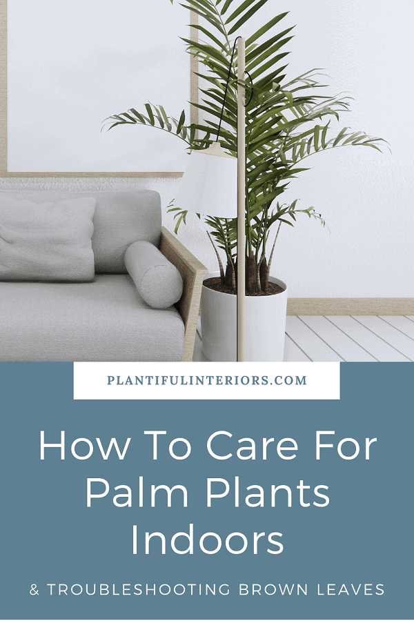 Care instructions for palm plants