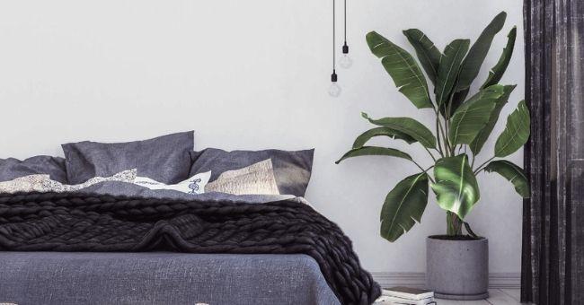 large plant beside blue denim bed