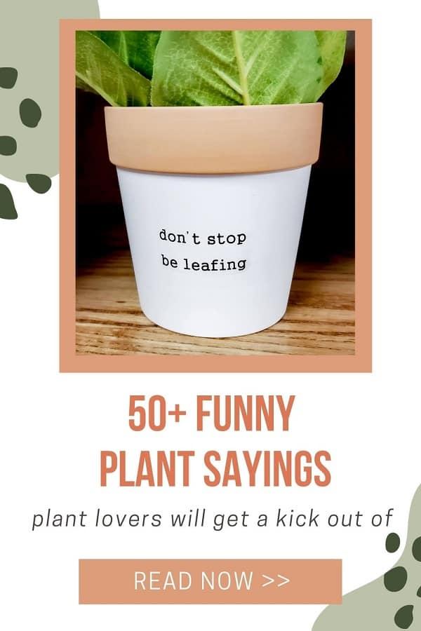 white plant pot says don't stop be leafing plant pun