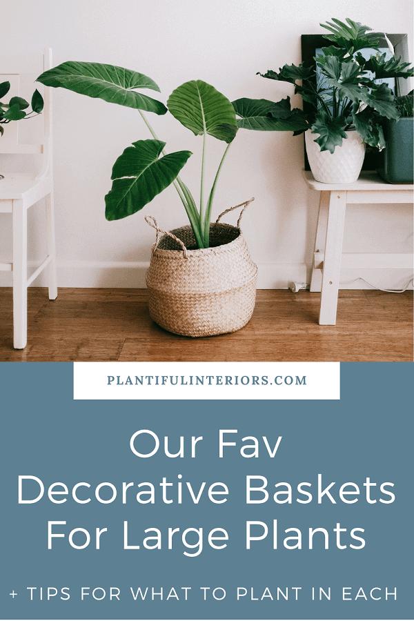 Decorative Baskets For Large Plants