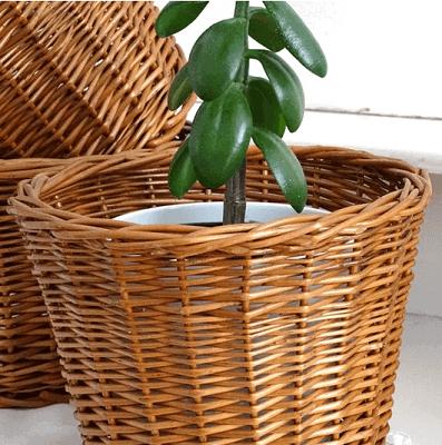 Medium sized natural wicker planter