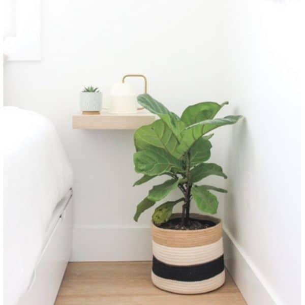 boho woven large plant basket with fiddle leaf fig