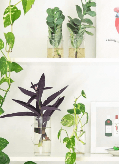 decorate living room shelves with trailing plants