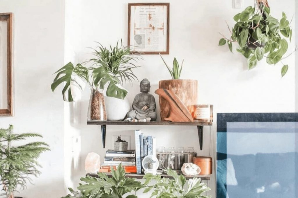 Apartment decorated with plants and zen vibe