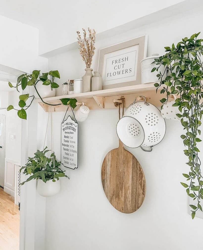 Vine plants on shelf with old fashioned kitch accessories