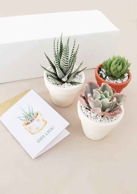 Succulent Subscription Gift