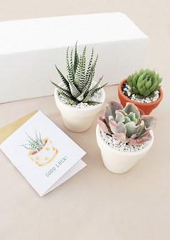 Succulents Box Subscription Gift Idea