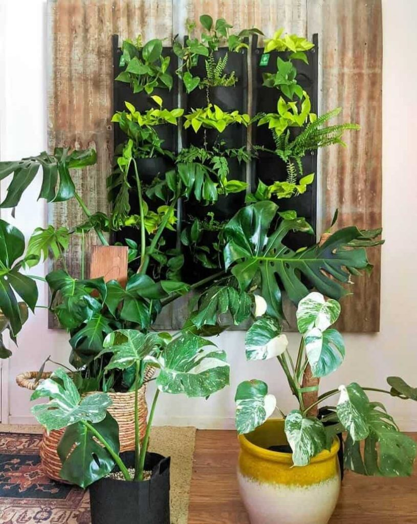 various houseplants growing up living room wall