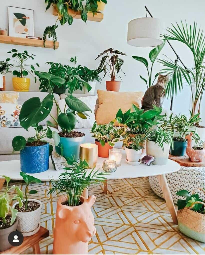 plant jungle in bohemian style decor