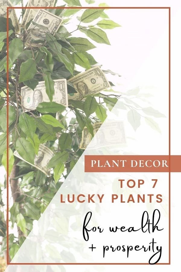 money growing on tree with text top 7 lucky plants for wealth and prosperity