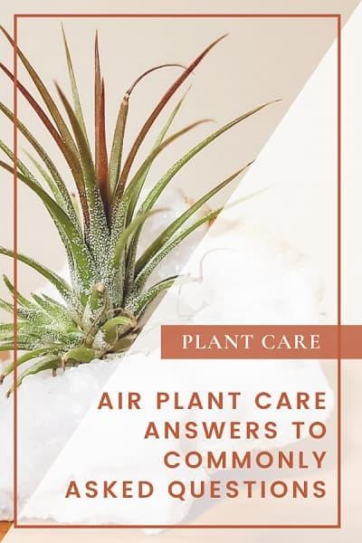 Air Plant Care QA