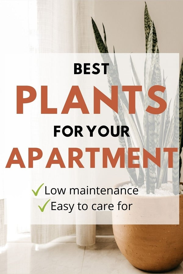Best Plants For Your Apartment [Guide]