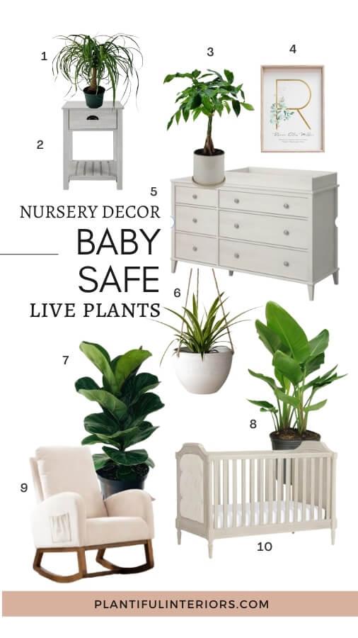 baby safe live plants