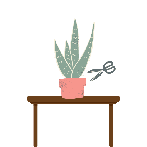 illustration of snake plant with scissors close to base to propagate snake plant