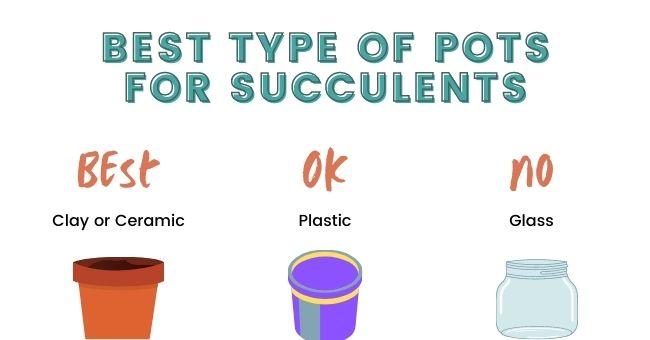 Best Pot Type For Succulents