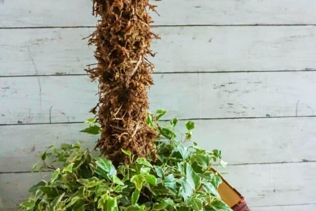sphagnum moss pole in climbing vine