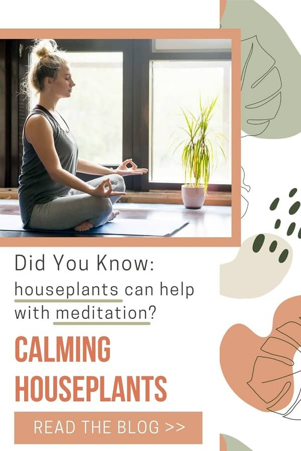 woman meditating with calming houseplant beside her