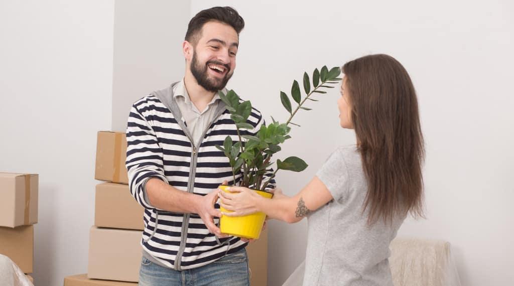 Best housewarming houseplants