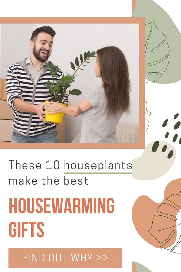 new home owners receiving houseplant housewarming gift