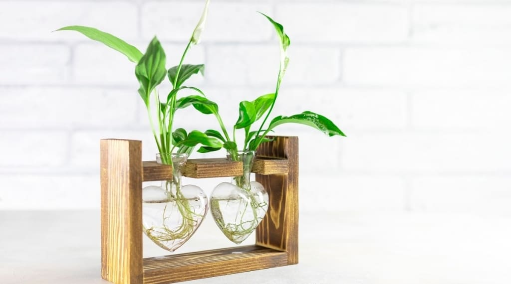 plant cuttings rooted in water inside round glass test tubes and wooden block