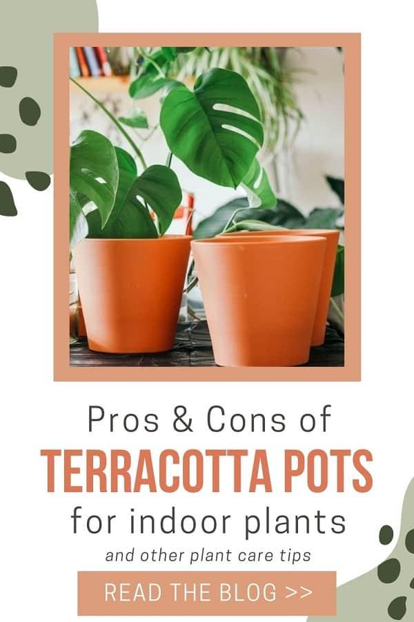terracotta pots for indoor plants