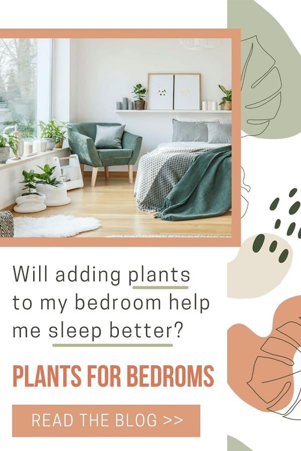 Various houseplants by windowsill in relaxing bedroom