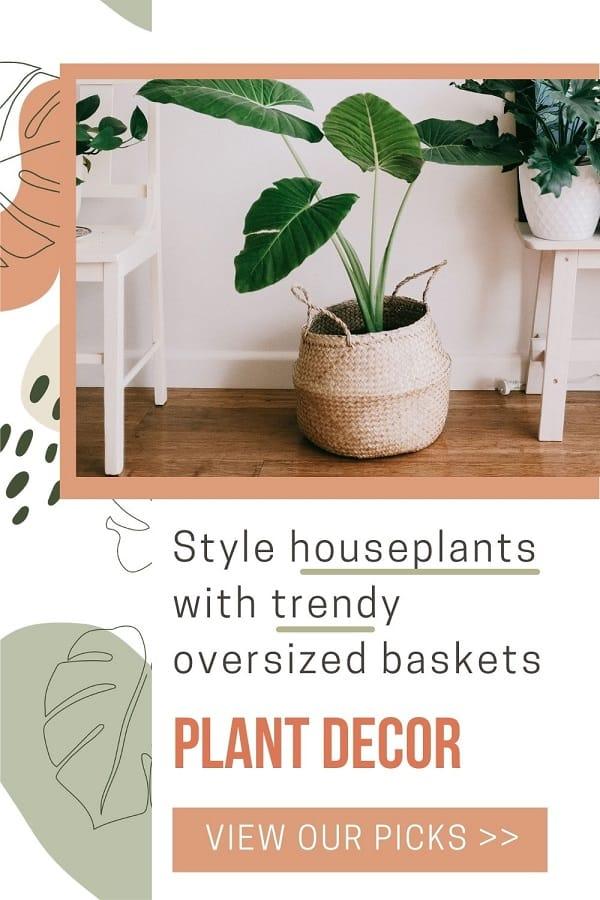 large plant inside decorative basket