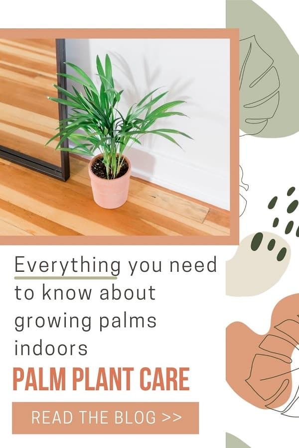 indoor palm plant in pink pot