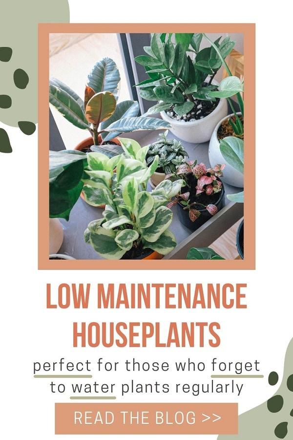 variety of low maintenance houseplants