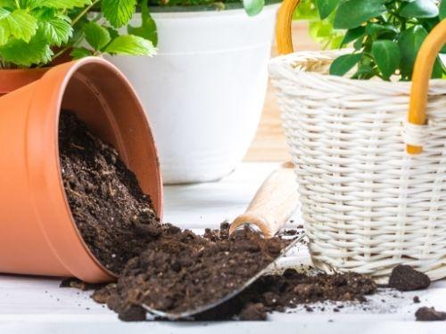potting soil spilling out of tipped terracotta pot