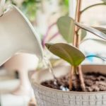 Is Distilled Water For Houseplants The Best? | Plantiful Interiors