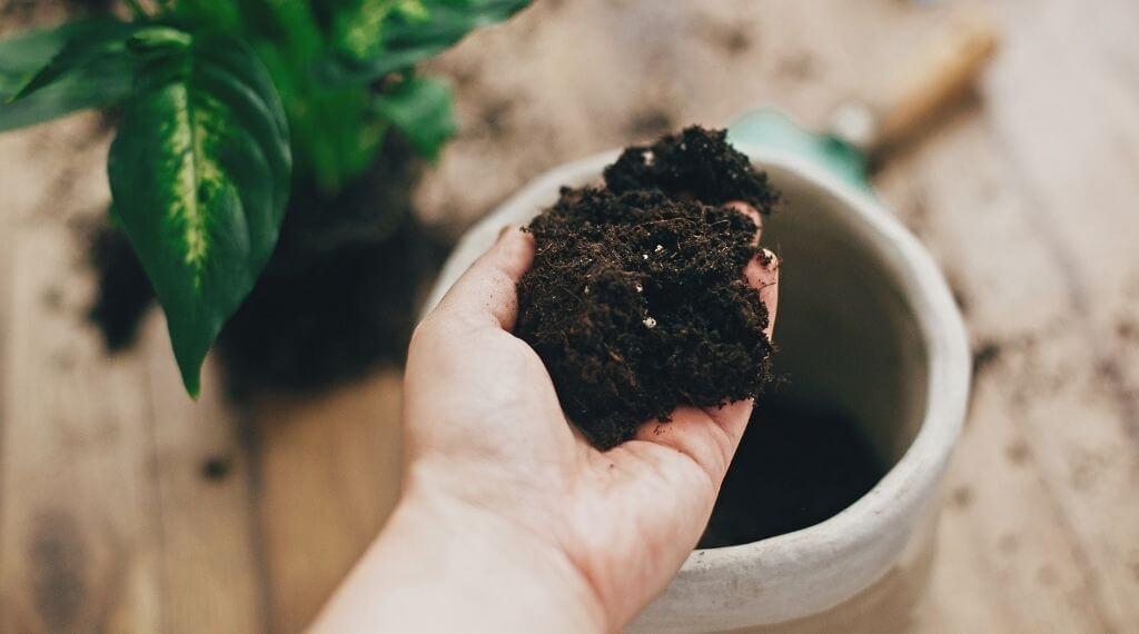hand holding potting soil checking if potting soil has gone bad