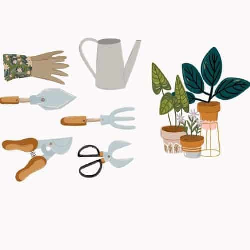 indoor plant care tools OPT
