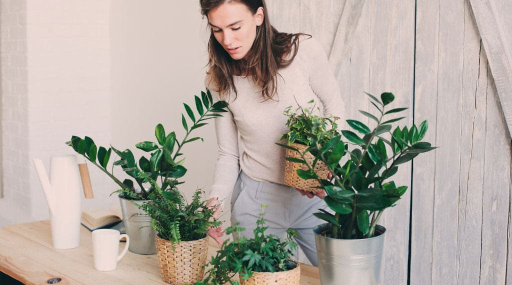 woman preparing to move indoor plants outside
