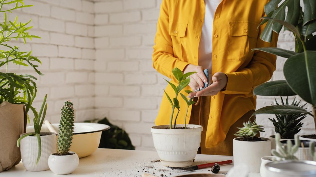 Why Distilled Water For Houseplants Is The Best   Plantiful Interiors