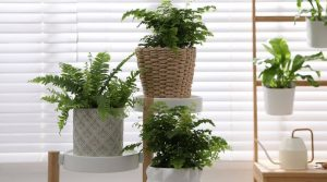 different types of indoor ferns sitting on tiered plant stand