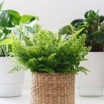 5 Best Self Watering Indoor Plants To Beautify Your Home | Plantiful Interiors