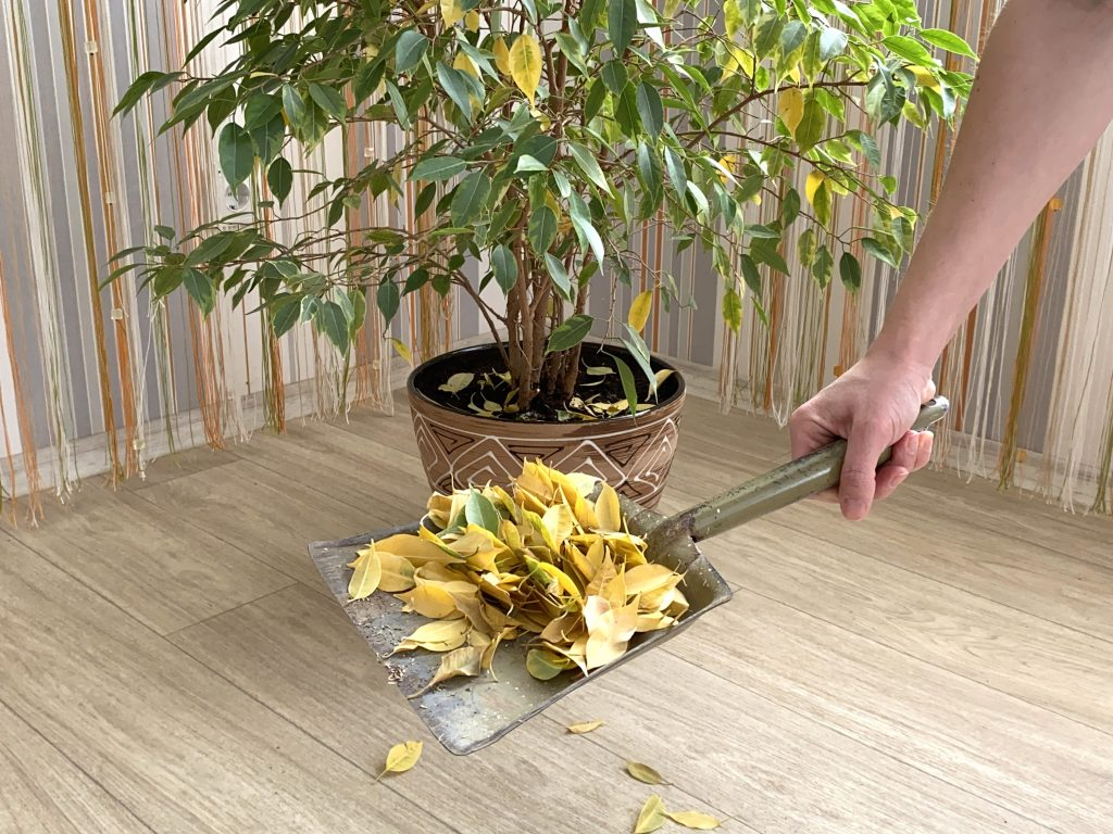Are Your Indoor Plants Dying? Do This To Revive Them - Plantiful Interiors